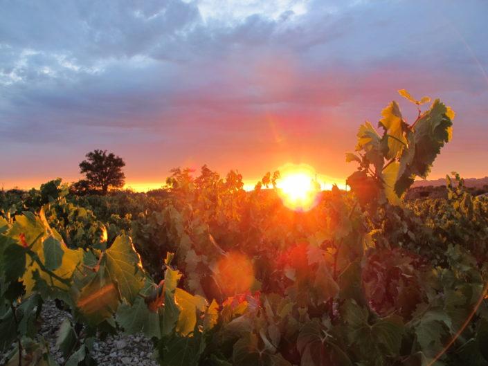 Avis - Coucher de soleil dans les vignes de Provence