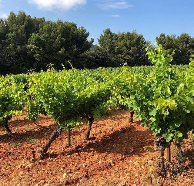 trias beautés de venise dentelles de montmirail vaucluse provence découverte vadrouille viticulture vin patrimoine histoire provence